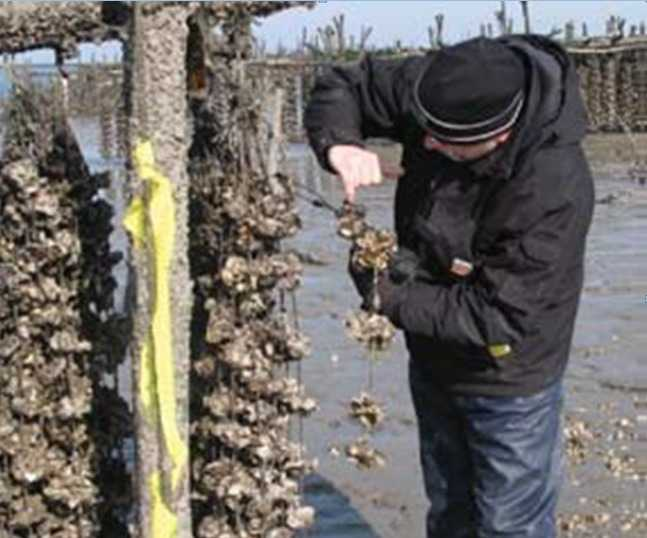 ITOPF_Technical_Adviser_surveying_aquaculture_facilities_after_the_spill_from_HEIBEI_SPIRIT.