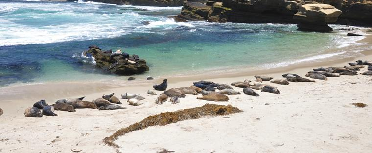 dead sea animals