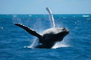 granville whale