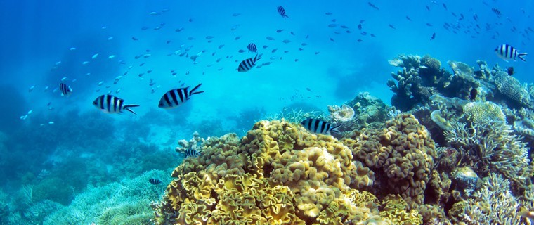 dying corals