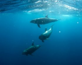 coronavirus affect marine mammals